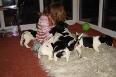Dora's puppies 005