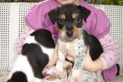 Puppies Dora